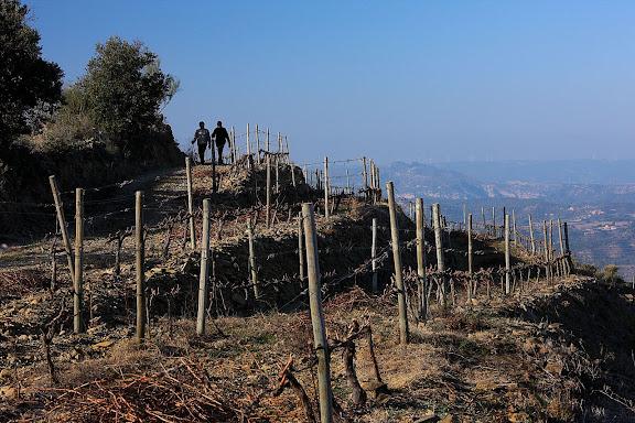 Vinyes dalt la serra de les Obagues. Falset, Priorat, Tarragona