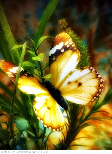 'Butterfly' photo (c) 2012, Walt Stoneburner - license: http://creativecommons.org/licenses/by/2.0/