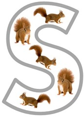 Ss Squirrel