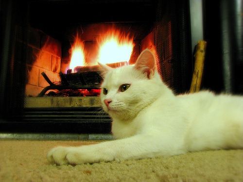 cat-at-the-fireplace