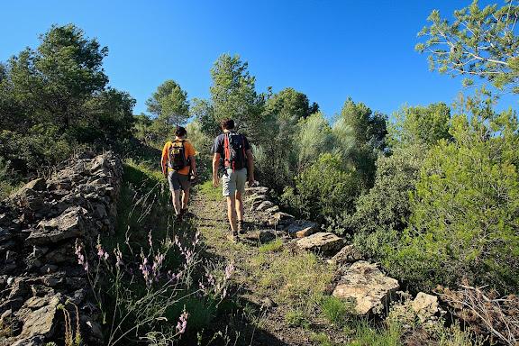 Antic camí ral de Falset a Gratallops, vinyes DOQ Priorat, Gratallops, Priorat, Tarragona