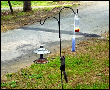 05 - Bird feeders, Shepards Hook and Squirrel