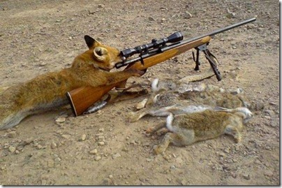 fox and gun