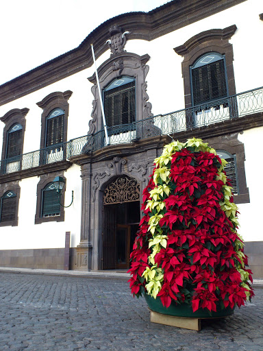 new flowers in Funchal city hall