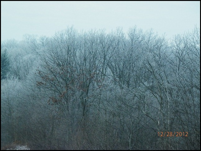 Ice covered trees in the Mountains of TN.