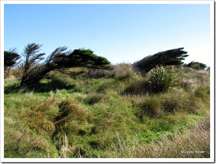 It gets very windy at Slope Point and Waipapa Point.