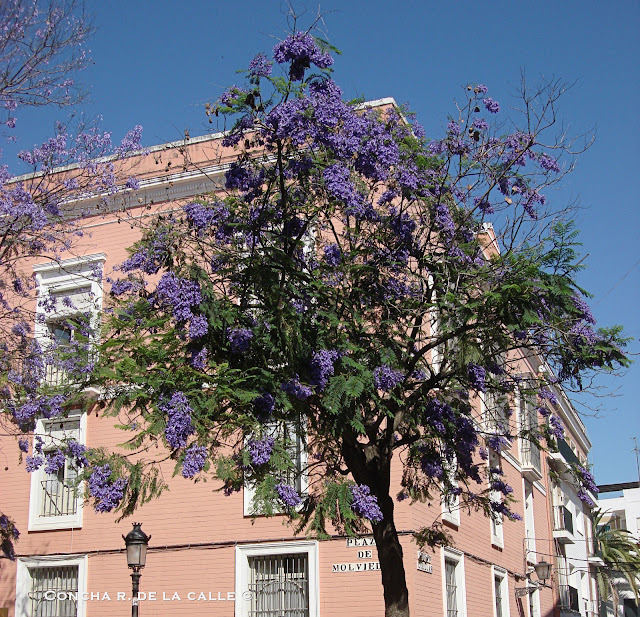 Plaza de Molviedro - Sevilla - Mayo 2010 - 1a.jpg