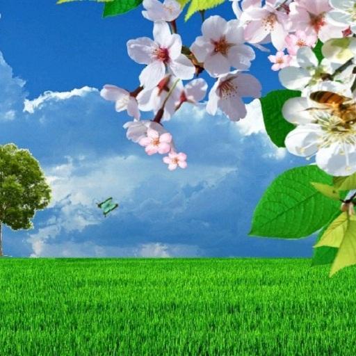 Cherry Blossom Live Wallpaper LOGO-APP點子
