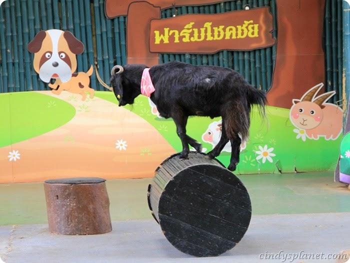 Chok Chai Farm Petting Zoo (1)