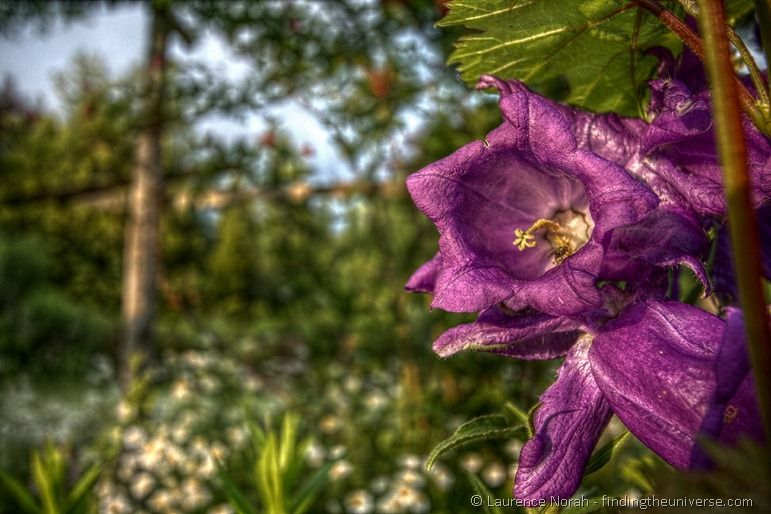 HDR flower and fly 2