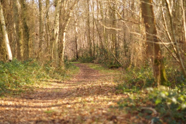 Foxley Wood in winter sunshine