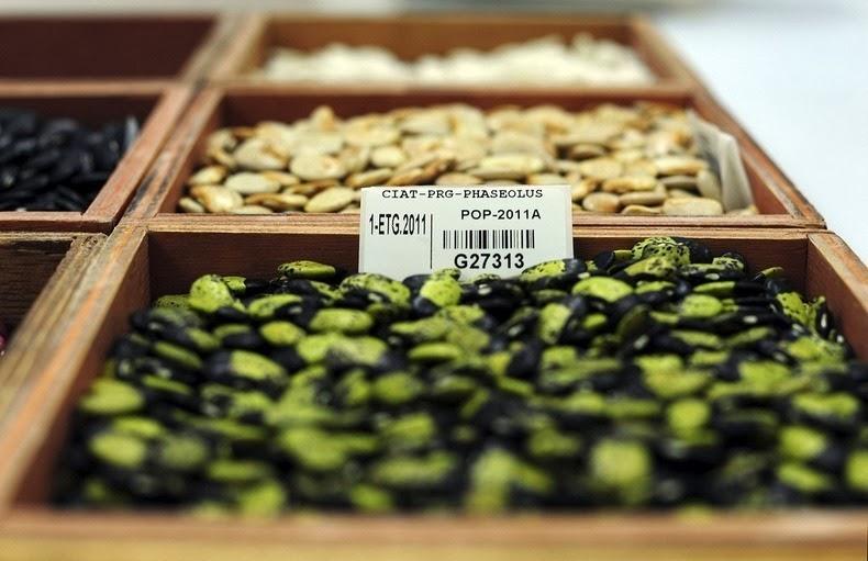 svalbard-seed-vault-Semences du futur