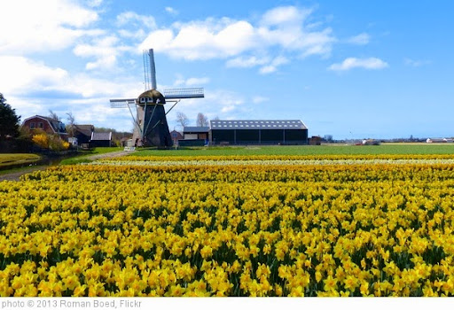 'Windmill in a field of flowers' photo (c) 2013, Roman Boed - license: https://creativecommons.org/licenses/by/2.0/