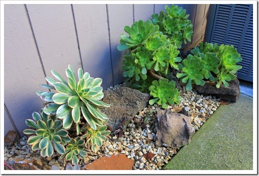 121218_backyard_succulent_bed_13