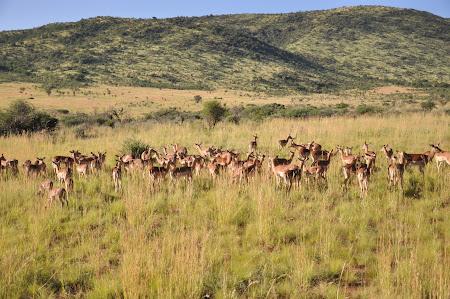 7. Safari Africa de Sud.JPG
