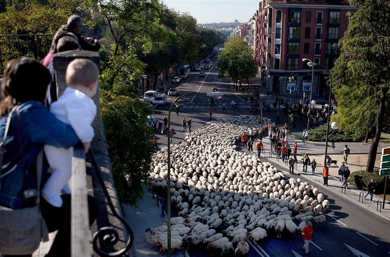 sheep-protest-2011-3