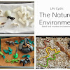 Life Cycle: Natural Environment I