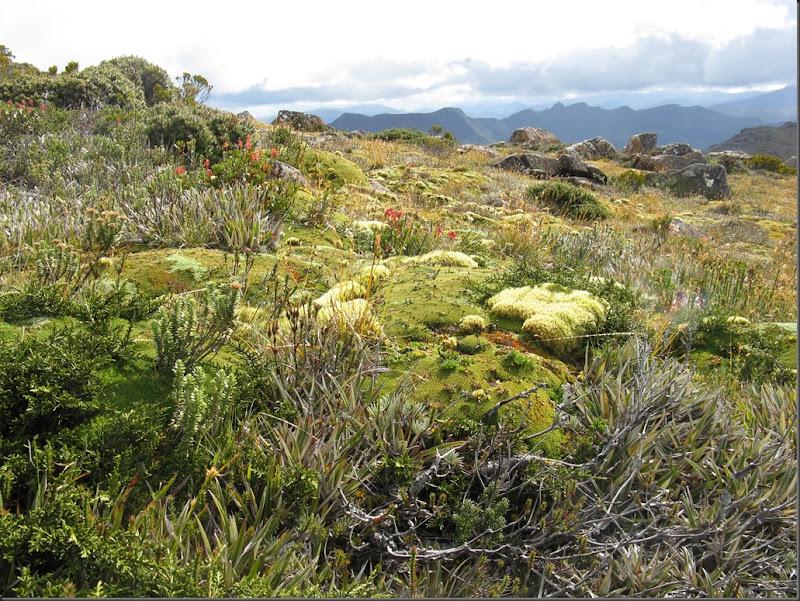 Cushions on summit with Loddon Range