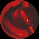 Immagine del profilo di dae