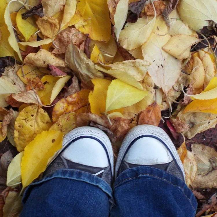 yellow leaves and converse