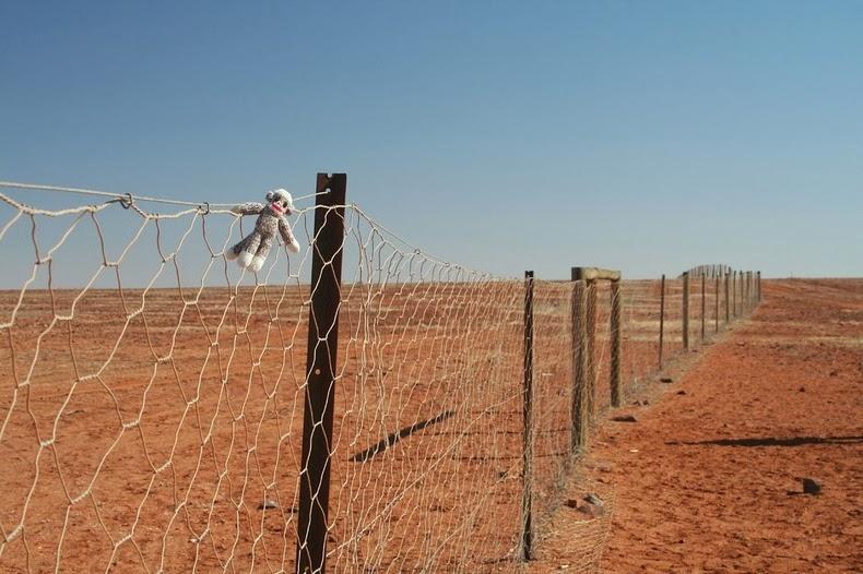 Dingo fence km de cerca del perro australia