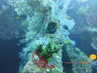 Diving Amed Bali 37