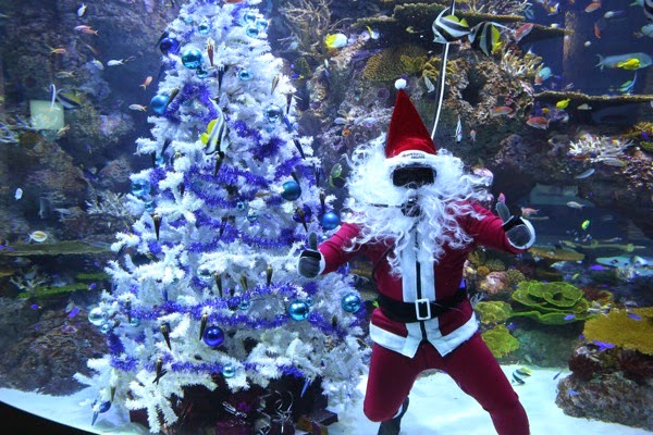S E A Aquarium  Have a Merry Fishmas and meet Scuba Santa and his elf 2