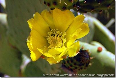 1275 Artenara-AcusaTunera común)