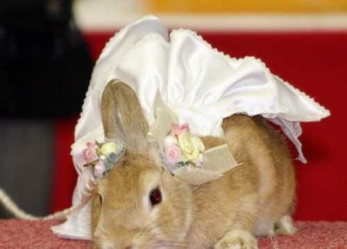 rabbit-fashion-2010