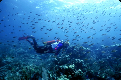 canouan st-vincent-and-the-grenadines-scuba-diving