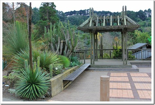 Succulents and More: UC Botanical Garden—New World Desert Collection