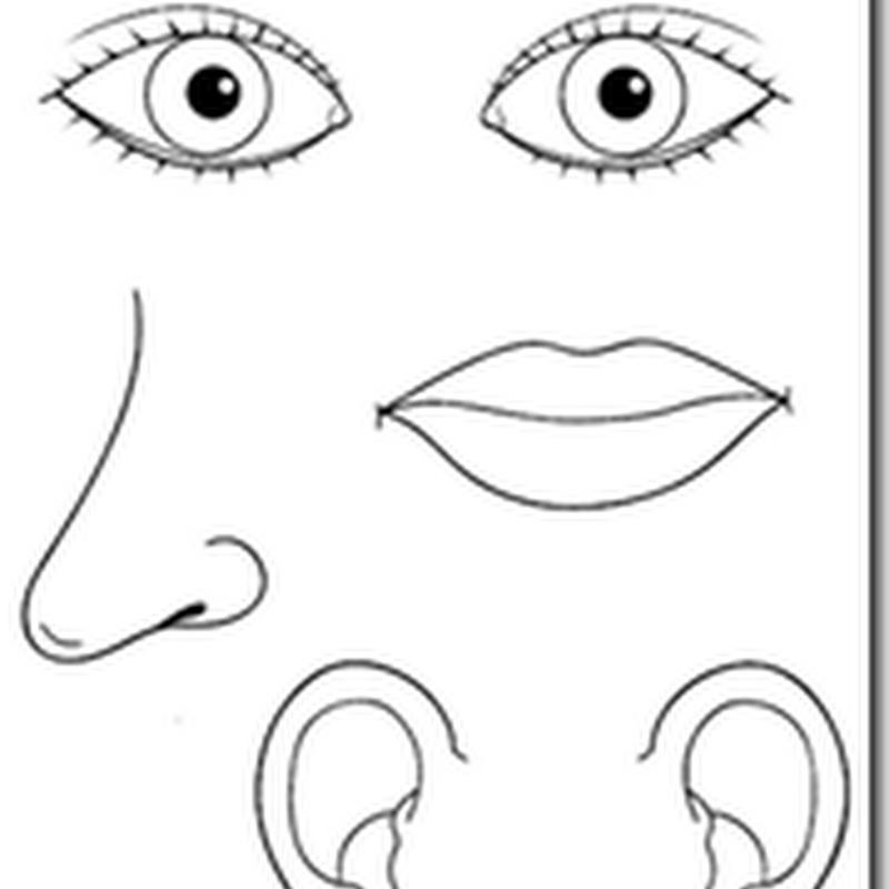 colorear dibujos de los 5 sentidos