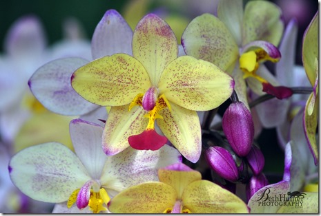 cr-orchid-0007