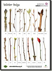 winter twigs woodland trust