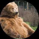T Bear