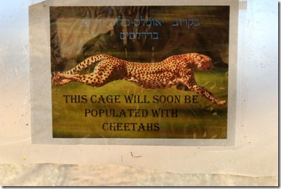 Cheetahs coming to Haibar sign, tb010712117