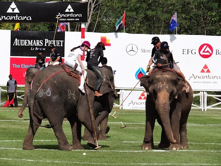 21. Tiffany pe elefanti.JPG