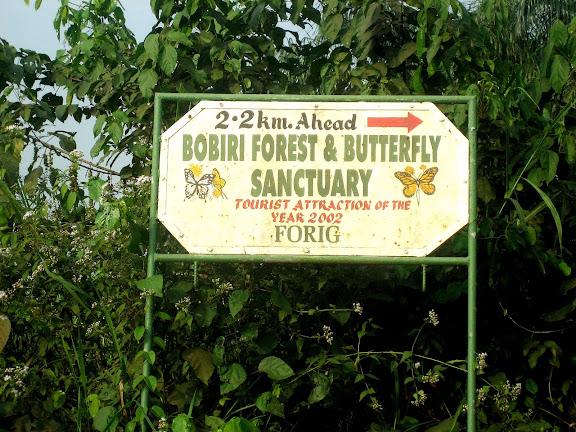 Bobiri Forest Butterfly Sanctuary (Ghana), 17 janvier 2006. Photo : Henrik Bloch