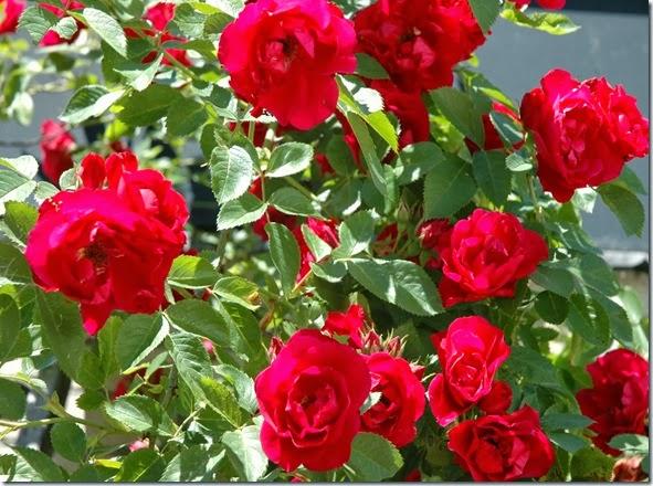 Os Poderosos Podem Matar Uma Duas Ou Três Rosas Mas Jamais Conseguirão Deter A Primavera Inteira: É PRIMAVERA!!