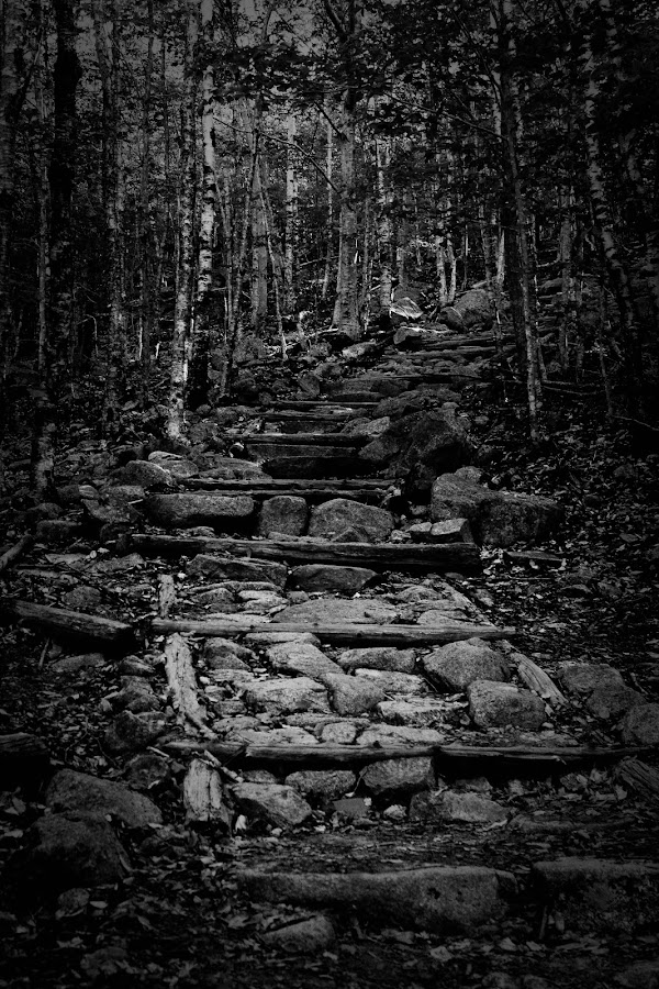 Trail to Bubble Rock by Bethany Carter - Black & White Landscapes ( maine, acadia national park, bar harbor, bubble rock )