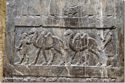 Black Obelisk, Side A, tribute from Musri, camels, tb112004818