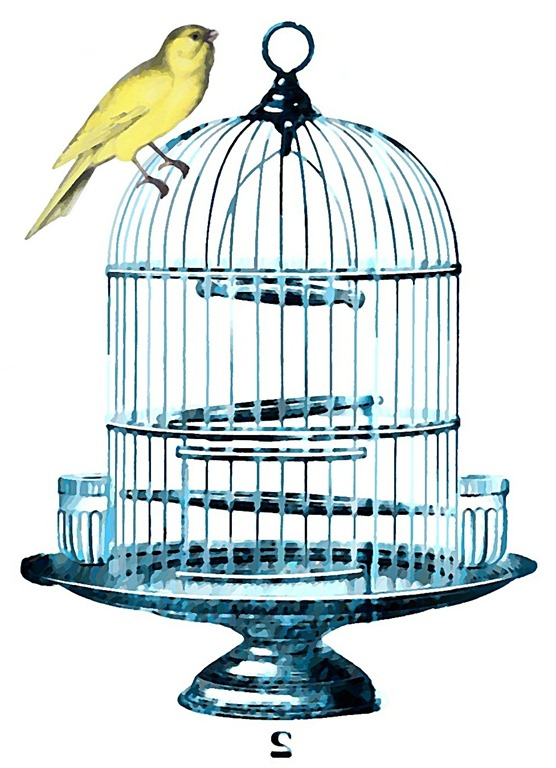 birdcage blue watercolor best transfer