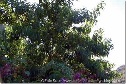 6410 Santa Brígida-Hoya Chiquita(Nogal)