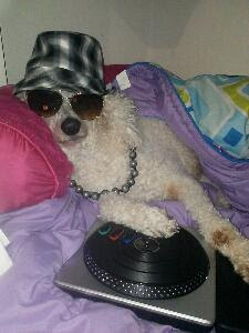 Carma Poodale rapping poodle