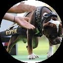 Image Google de Cerbere Bulldogge