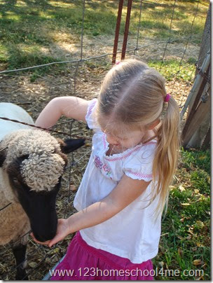 Meeting the sheep on a historic 1930s dairy farm