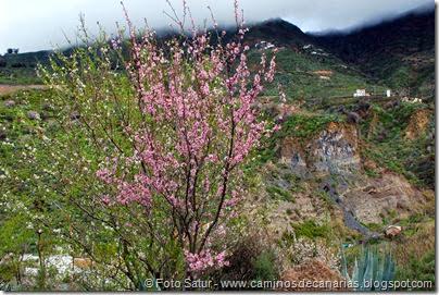 7531 La Goleta-Tejeda(Almendro en Flor)