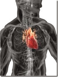 Effect of anabolic steroids on heart