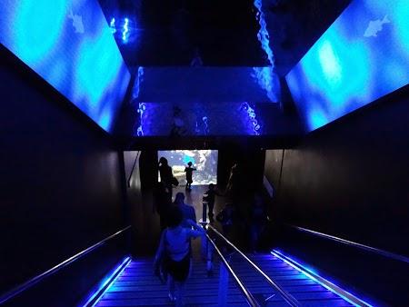 23. Muzeul Oceanografic - Monaco.JPG
