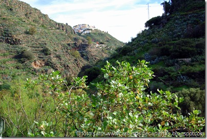 4438 La Atalaya-Barranco Garcia Ruíz